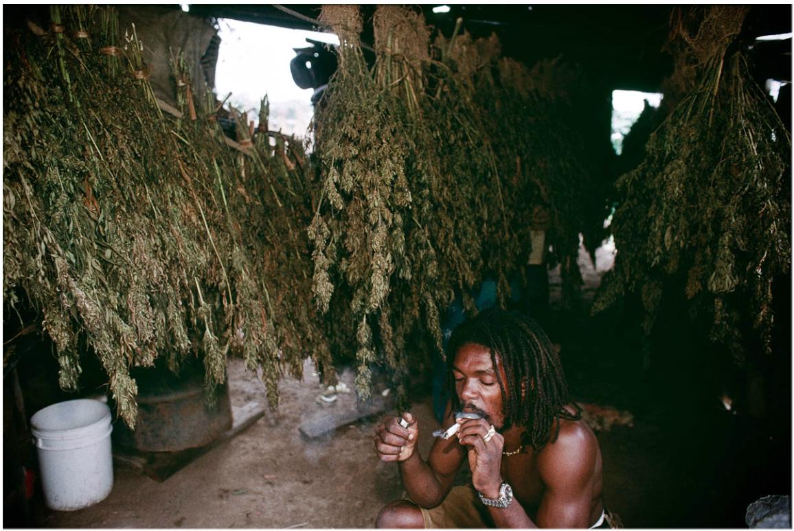 Rasta fumando maconha em plantação